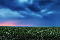 Storm clouds flying over field Royalty Free Stock Photo