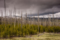 Storm Clouds on Mount Washburn royalty free stock photography