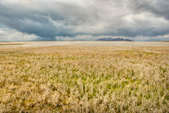 Storm clouds over desert grasslands Stock Photography