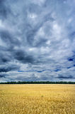 Storm clouds over a golden field. Royalty Free Stock Photography