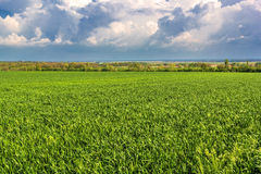 Storm clouds over green field and forest belt Stock Image
