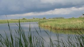 Storm clouds over the lake with reeds stock footage