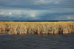 Storm Clouds over the Marsh. An autumn storm gathers in the distance over this marsh and wetland as evening approaches Royalty Free Stock Photography