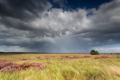 Storm clouds over marsh with flowering heather Stock Image