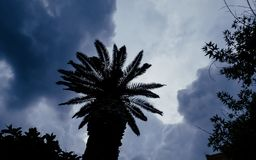 Storm clouds over the palm tree stock photos