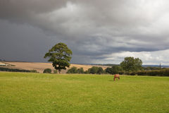 Storm clouds over rural landscape. An english landscape with a bay horse grazing a sunlit meadow against a background of dark storm clouds royalty free stock image