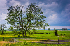 Storm clouds over a tree in a field, Gettysburg, Pennsylvania. Royalty Free Stock Photography