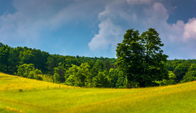 Storm clouds over a tree and a field in the rural Potomac Highla Stock Photography