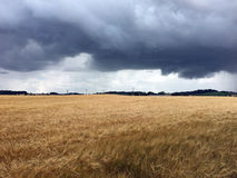 Storm clouds over wheat fields. Storm clouds over Scottish wheat fields in Summer Stock Image