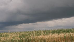 Storm clouds over a yellow grain field stock footage