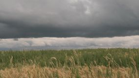 Storm clouds over a yellow grain field. stock video footage