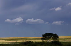 Storm Clouds Prairie Sky Stock Photography
