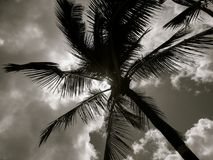 Palm Tree Against Bright Sun Stock Photography