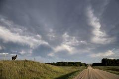 Storm Clouds Saskatchewan Llama. Storm Clouds Saskatchewan Prairie scene Llama Stock Images