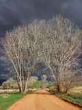 Storm Clouds. Several sun lite deciduous trees stand on the sides of a rural gravel road with a very dark ominous sky as a backdrop. Location: Castle Valley stock image
