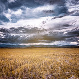 Storm clouds and yellow field Stock Photography