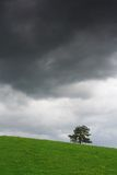 Storm is coming. Dandelion meadow with tree and stormy clouds Stock Photos