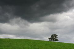 Storm is coming. Green meadow with tree and stormy clouds Stock Photography