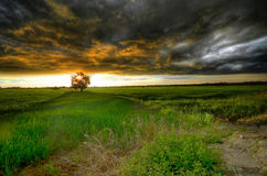 Storm coming at the paddy field during sunset stock images