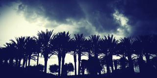 Storm coming. Palm trees cloudy storm weather sky Stock Photo