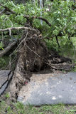 Storm consequences in the city of Minsk Stock Photography