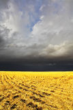 The storm in a countryside begins Royalty Free Stock Images