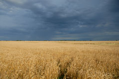 Storm Crop Royalty Free Stock Photography