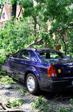 Storm Damage. Tree crushing car after storm Stock Photo