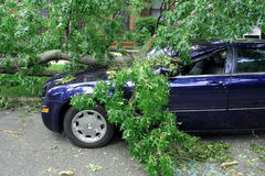 Storm Damage. Tree having fallen on car after heavy storm Royalty Free Stock Photos