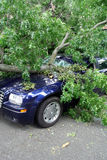 Storm Damage. Tree falls on car after storm Royalty Free Stock Photo