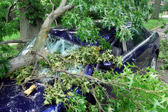 Storm Damage. Tree falls on car after storm Royalty Free Stock Images