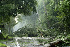 Storm Damage. With downed trees and utility lines after tornado
