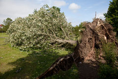 Storm Damage Royalty Free Stock Photos