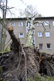 Storm damage after hurricane Herwart in Berlin, Germany. Storm damage with fallen birch, ripped out root ball and damaged house after hurricane Herwart in Berlin royalty free stock images