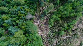 Storm damage, forest. Aerial view stock video footage