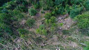 Storm damage, forest. Aerial view stock footage