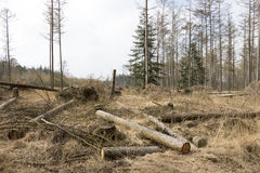Storm damage in a forest. Royalty Free Stock Photo