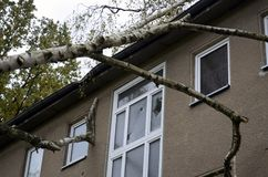 Storm damage after hurricane Herwart in Berlin, Germany. Storm damage with fallen birch and damaged house after hurricane Herwart in Berlin, Germany royalty free stock image