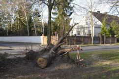 Storm damage after hurricane Herwart in Berlin, Germany. Storm damage with root ball of a fallen tree after hurricane Herwart in Berlin, Germany royalty free stock image