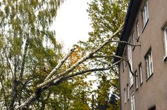 Storm damage after hurricane Herwart in Germany. Storm damage with fallen birch and damaged house after hurricane Herwart in Berlin, Germany stock photos