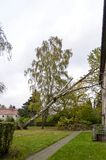 Storm damage after hurricane Herwart in Germany. Storm damage with fallen birch and damaged house after hurricane Herwart in Berlin, Germany stock image
