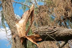 Storm damage Royalty Free Stock Image