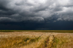 Storm dark clouds. Over field Stock Photos