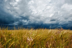 Storm dark clouds over field Stock Image