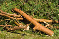 Storm demagage Stock Image