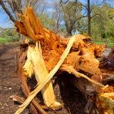 Storm destruction Royalty Free Stock Photo