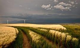 Storm för vindlantgård fotografering för bildbyråer
