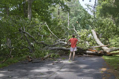 Storm Fells Tree Blocking the Road and Pedestrians Royalty Free Stock Image
