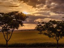 After the storm in the field royalty free stock images