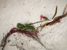After the storm. Flotsam and jetsam washed up on the beach Stock Images